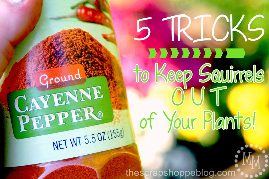 5 Tricks To Keep Squirrels Out Of Your Plants The Scrap Shoppe