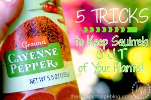 5 Tricks to Keep Squirrels OUT of Your Plants!