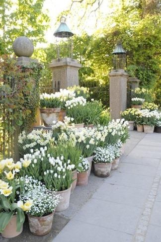 Bulb-container-garden