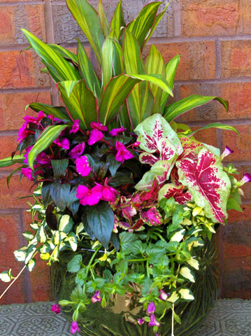 Colorful-Shade-Container-Garden-DIY