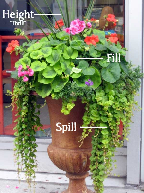 Height-Spill-Fill-Container-Gardening
