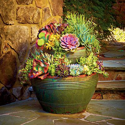 stacked-succulent-garden