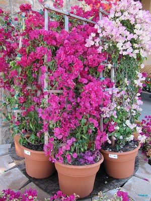 trellis-plant-container