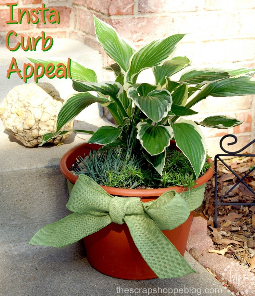Create Insta Curb Appeal with a carefully crafted container garden!
