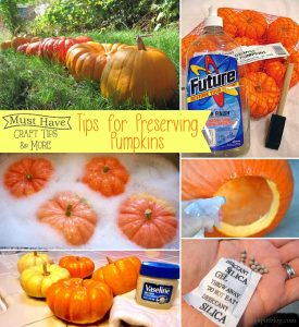 Must Have Craft Tips: The BEST Tips for Preserving Pumpkins all fall long