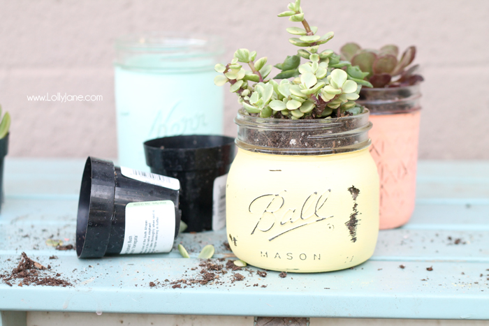 Trendy Succulent Projects