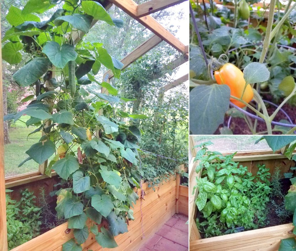 Don't let critters in your garden get you down, build an enclosed garden greenhouse to keep them out!